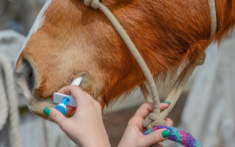 How to Use CBD for Horses?
